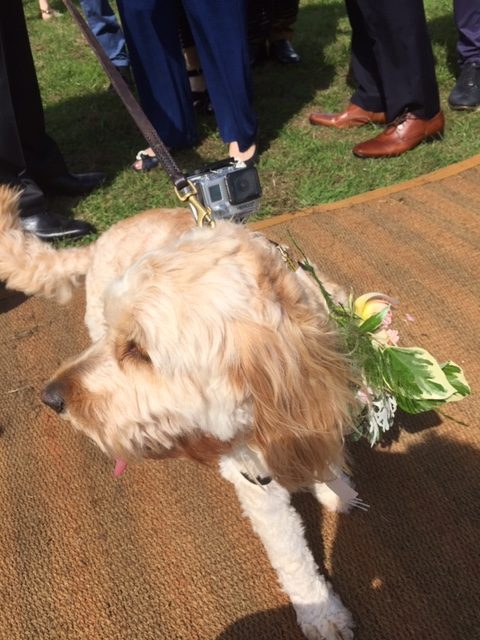 Alcott Wedding Dog GoPro Celebrant 2